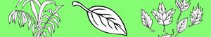 Plants and Leaves coloring pages